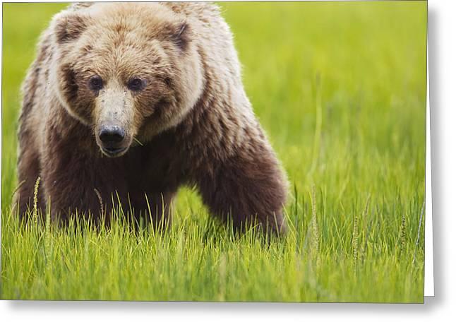 Brown Bear Up Close At Lake Clarke Greeting Card by Richard Wear