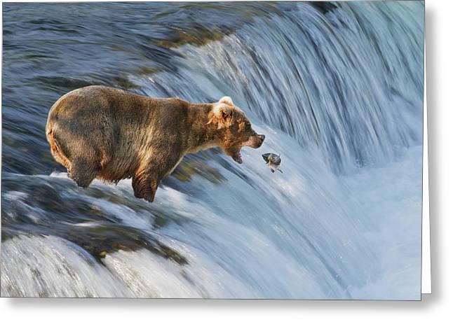 Brown Bear  Ursus Arctos Greeting Card by Gary Schultz
