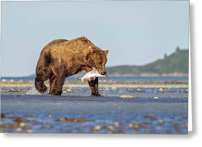 Brown Bear With Salmon Greeting Card by John Devries