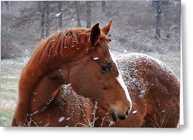 Snowing  Greeting Card by Nava Thompson