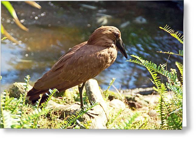 Brown Bird Greeting Card
