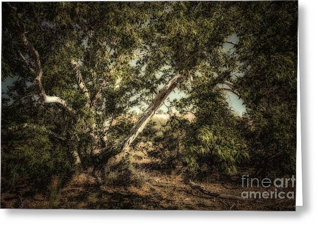 Brown Canyon Sycamore - Toned Greeting Card by Al Andersen