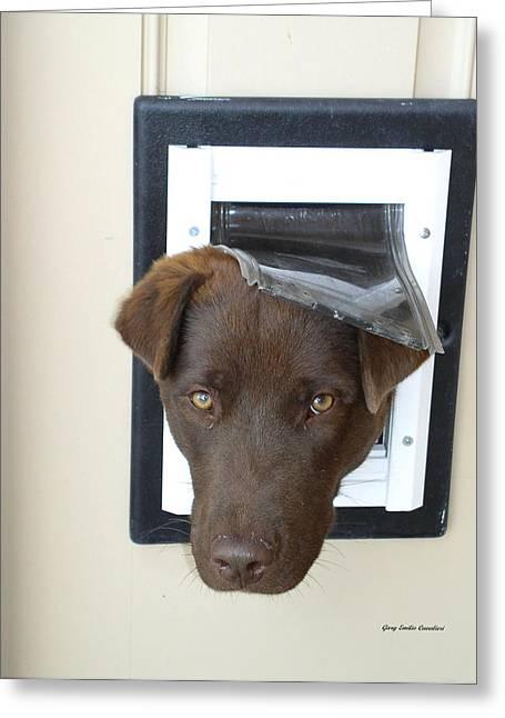 Brown Dog Greeting Card by Gary Emilio Cavalieri