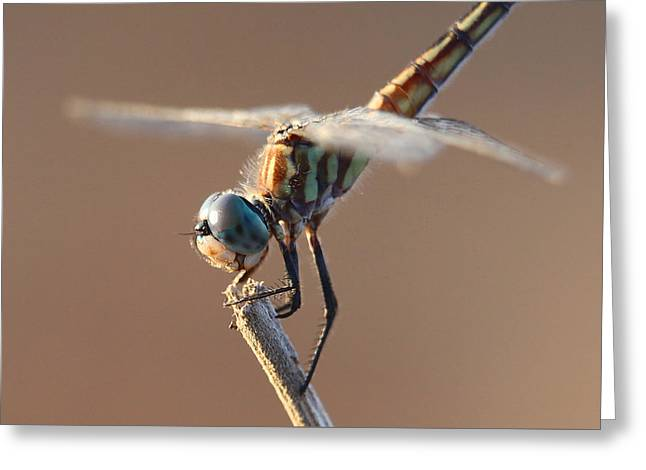 Brown Dragonfly Greeting Card