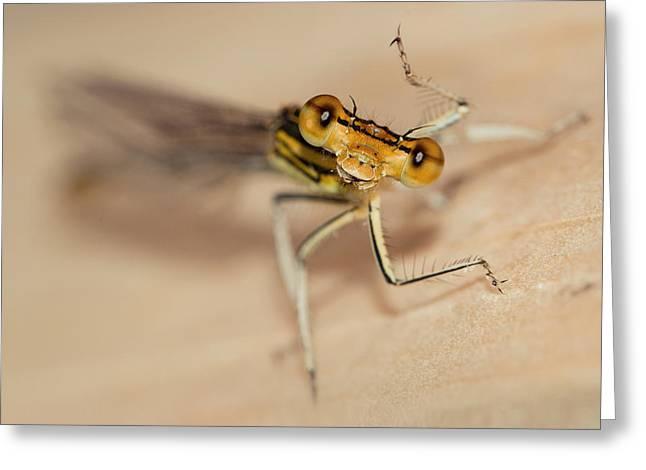 Brown Dragonfly With Funny Gesture Greeting Card by Jaroslaw Blaminsky