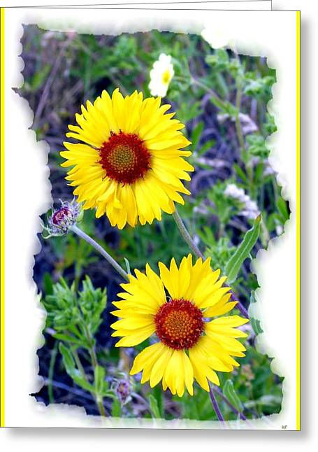 Brown- Eyed Susans Greeting Card