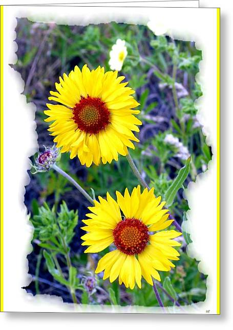 Brown- Eyed Susans Greeting Card by Will Borden
