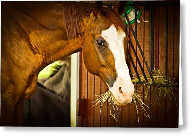 Greeting Card featuring the photograph Brown Horse by Joann Copeland-Paul