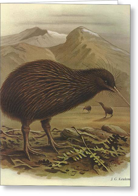 Brown Kiwi Greeting Card by Dreyer Wildlife Print Collections
