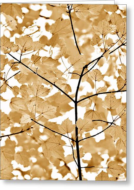 Brown Leaves Melody Greeting Card by Jennie Marie Schell