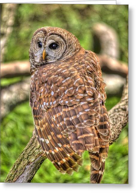 Brown Owl Greeting Card by Donald Williams