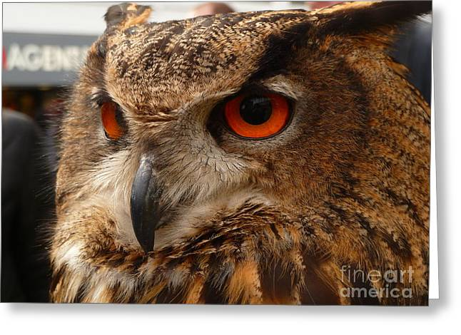 Greeting Card featuring the photograph Brown Owl by Vicki Spindler