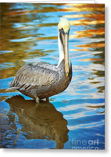 Brown Pelican Along The Bayou Greeting Card by Joan McCool