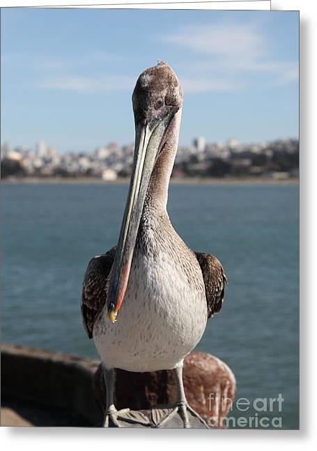 Brown Pelican At The Torpedo Wharf Fising Pier Overlooking The City Of San Francisco 5d21685 Greeting Card by Wingsdomain Art and Photography