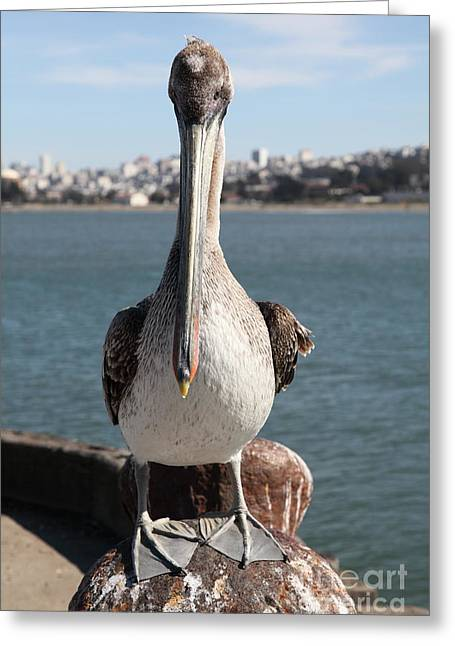 Brown Pelican At The Torpedo Wharf Fising Pier Overlooking The City Of San Francisco 5d21689 Greeting Card by Wingsdomain Art and Photography