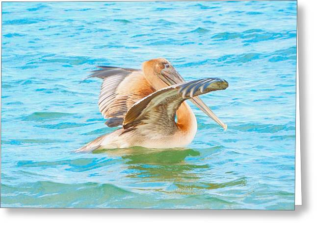Brown Pelican Greeting Card by Cindy Croal