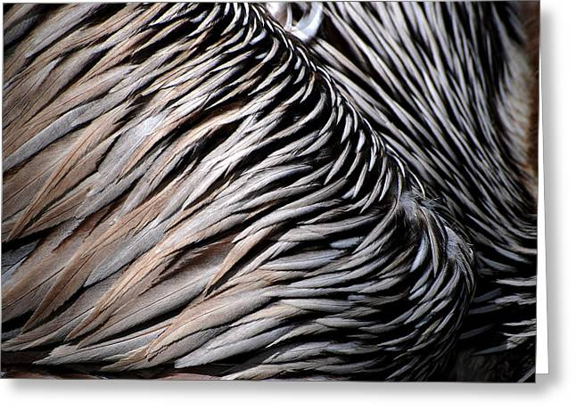 Brown Pelican Feathers Greeting Card