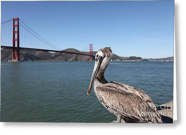 Brown Pelican Overlooking The San Francisco Golden Gate Bridge 5d21683 Greeting Card by Wingsdomain Art and Photography