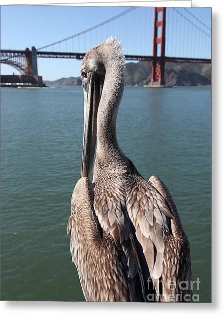 Brown Pelican Overlooking The San Francisco Golden Gate Bridge 5d21700 Greeting Card by Wingsdomain Art and Photography