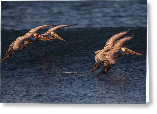 Greeting Card featuring the photograph Brown Pelican Pairs 73a2331 by David Orias