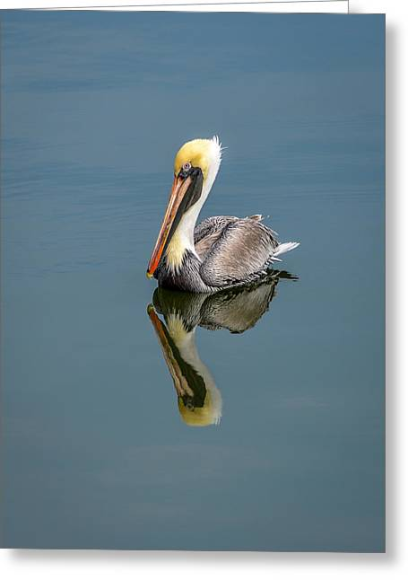 Greeting Card featuring the photograph Brown Pelican Reflection by Debra Martz