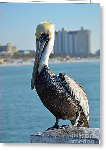Greeting Card featuring the photograph Brown Pelican by Robert Meanor