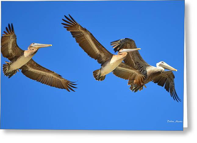 Greeting Card featuring the photograph Brown Pelicans In Flight by Debra Martz