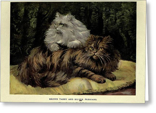 Brown Tabby And Silver Persian Greeting Card