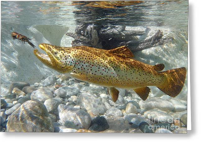 Brown Trout And Crawdad Greeting Card