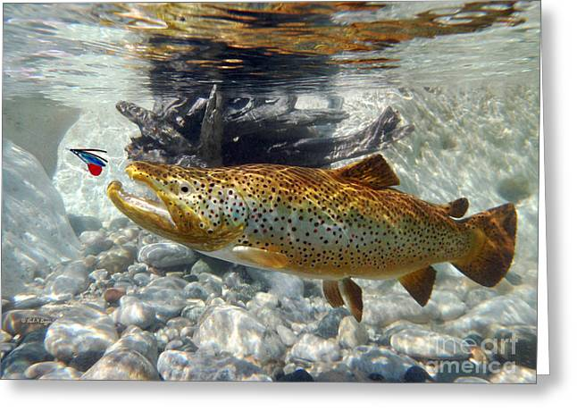 Brown Trout And Supervisor  Greeting Card by Paul Buggia
