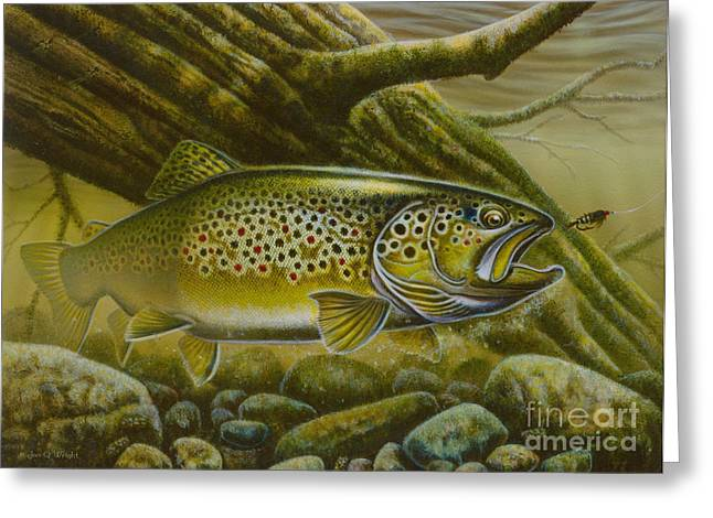Brown Trout Log Greeting Card by Jon Q Wright