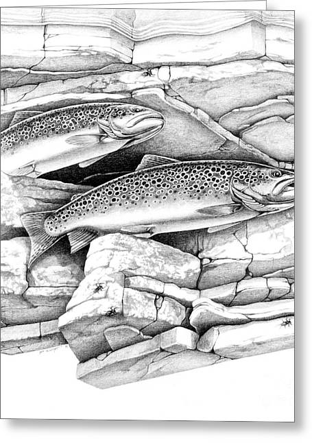 Brown Trout Pencil Study Greeting Card by Jon Q Wright