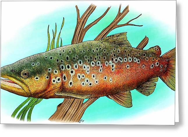 Brown Trout Greeting Card by Roger Hall
