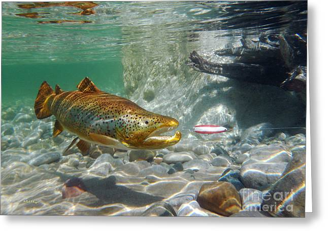 Brown Trout With Red And White Spoon Greeting Card by Paul Buggia