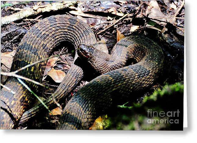 Greeting Card featuring the photograph Brown Water Snake by Kathy Baccari