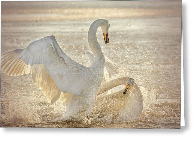 Brutal Swan Fight Greeting Card