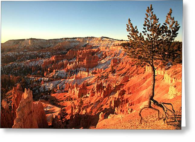 Bryce Canyon Greeting Card by Darryl Wilkinson