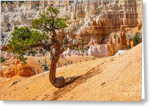 Bryce Canyon Np Greeting Card by Juergen Klust