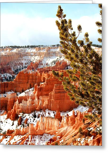 Bryce Canyon Pine Side Greeting Card by Marti Green