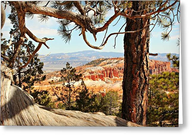 Bryce Canyon Through The Trees Greeting Card