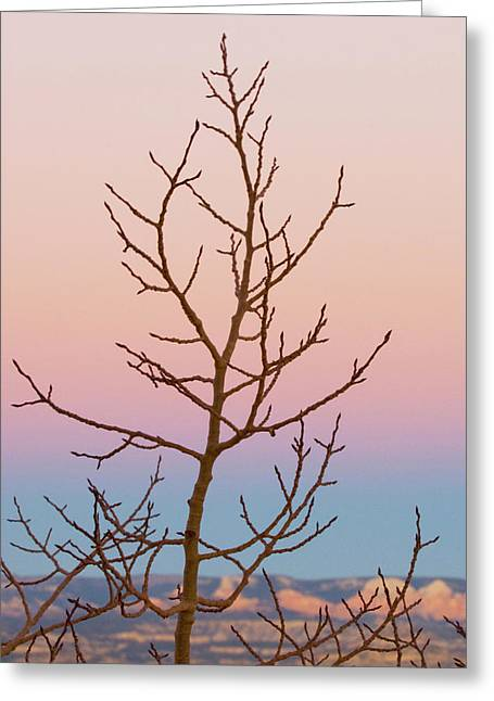 Bryce Canyon, Utah Greeting Card by Jan and Stoney Edwards