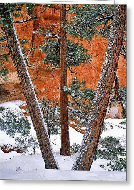 Bryce Winter Greeting Card by Leland D Howard