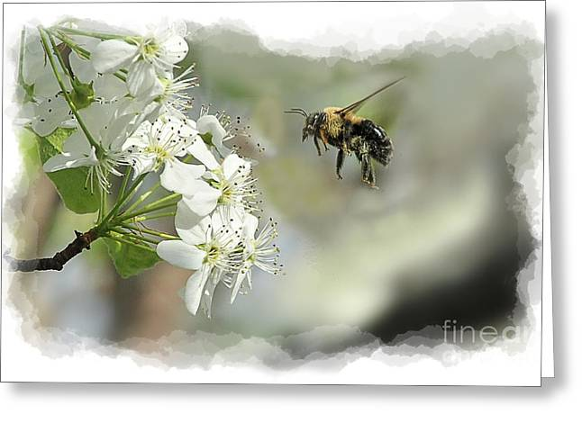 Bubble Bee Looking For Nectar Greeting Card by Dan Friend