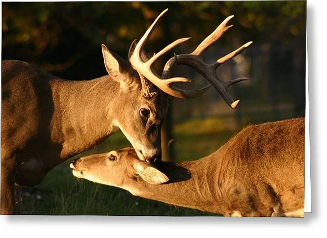 Buck And Friend Greeting Card