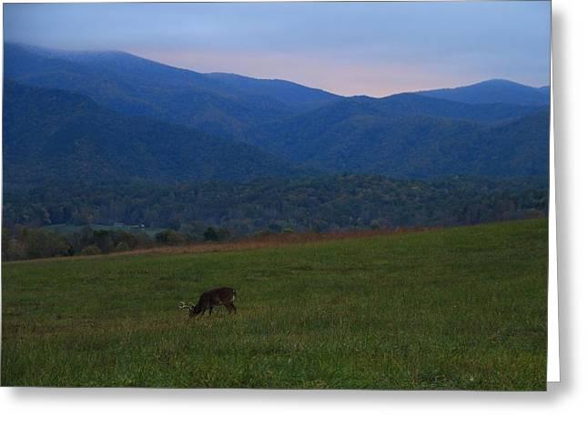 Buck At Sunrise Greeting Card