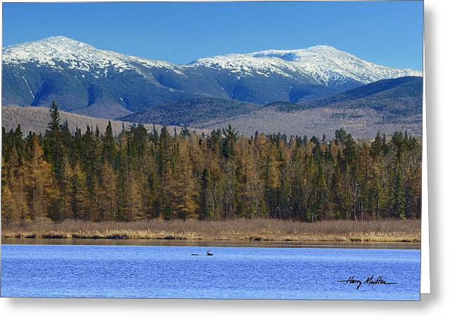 Buck Crossing Cherry Pond Greeting Card