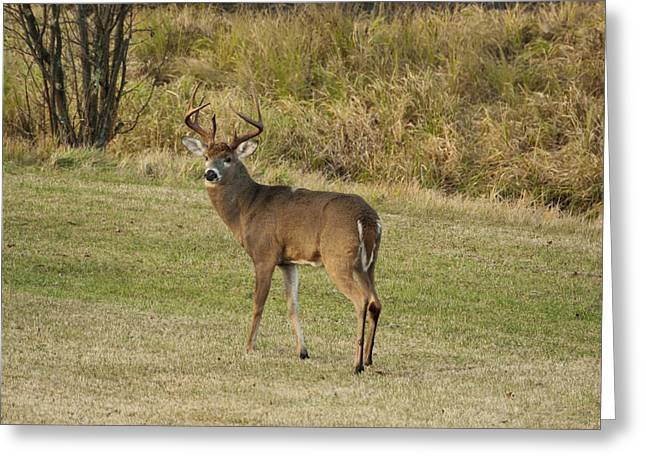 Greeting Card featuring the photograph Buck In Field by Judy  Johnson