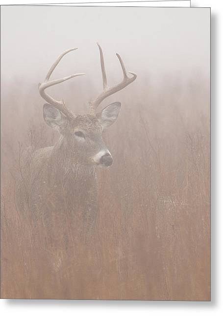 Buck In Fog Greeting Card