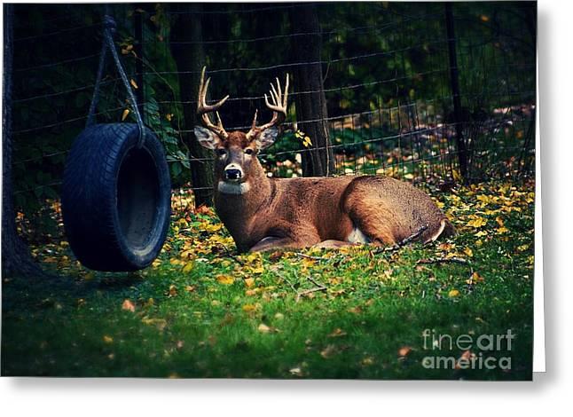 Buck In The Back Yard Greeting Card