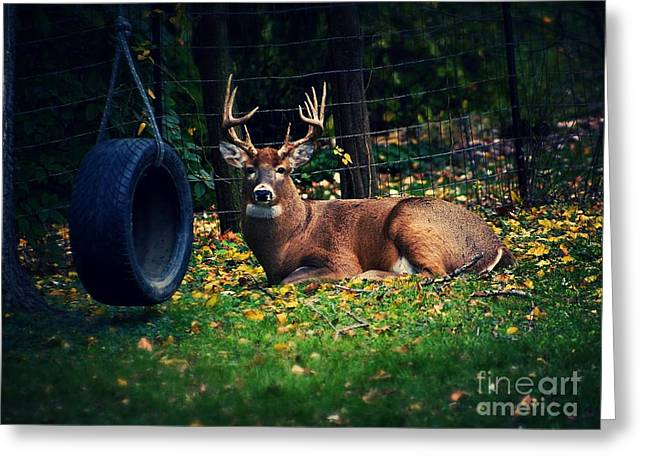 Buck In The Back Yard Greeting Card